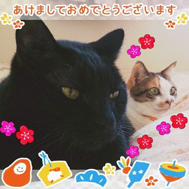 IMG_20150101093636.jpg