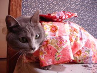kimono-f3.jpg