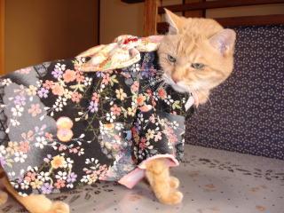 kimono-n1.jpg