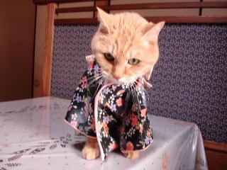 kimono-n2.jpg