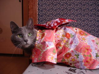 kimono-f2.jpg