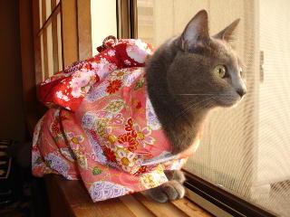 kimono-f5.jpg